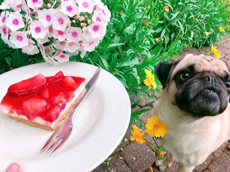 Frischkäse Torte mit Erdbeeren – Ohne Backen